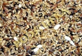 Deli Nature 83-EUROPEAN WILDBIRDS 2kg